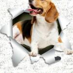 Pasme_beagle_light_wallpaper_preview_design_lights
