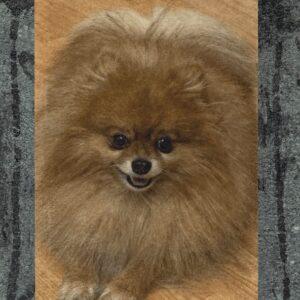 Pozor hudo prikupen pes aluminijast foto panel tabla za kužke za kužke 1