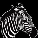 Zebra-bela-majica